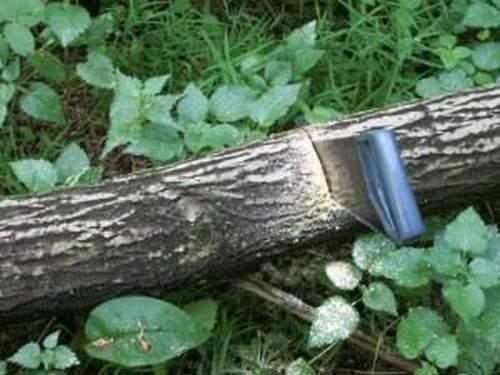 Можно Ли Пилить Поваленные Деревья В Лесу